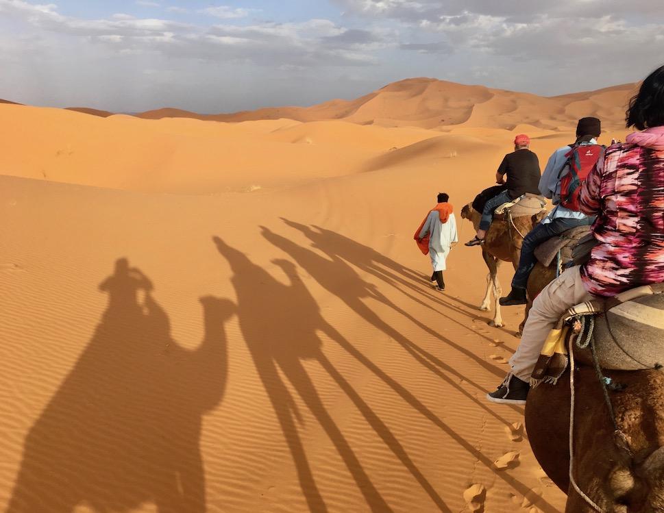 Kamele in der Wüste bei Erfoud zu Camp