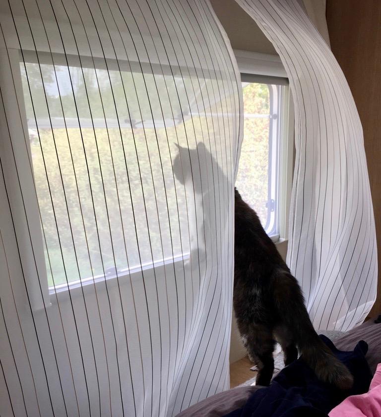 Nase im Wind im Wohnmobile