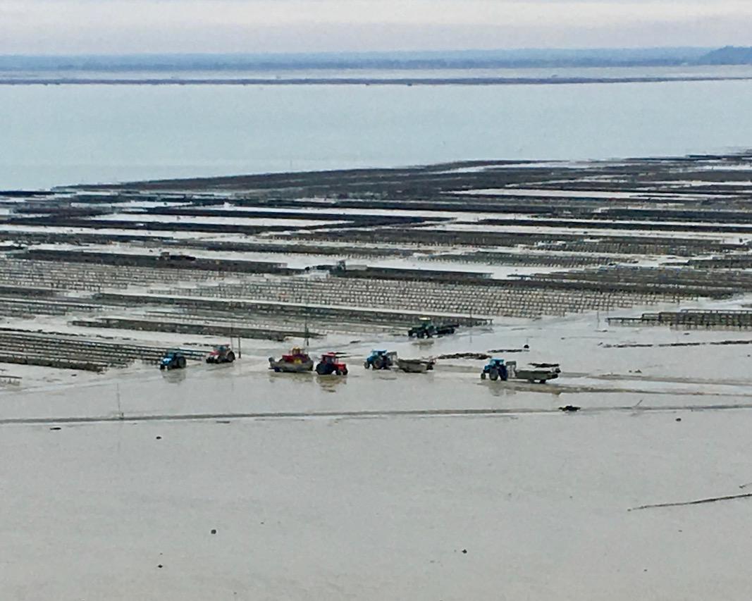 Arbeitsplatz der Austernfischer Le Hock Cancale Bretagne