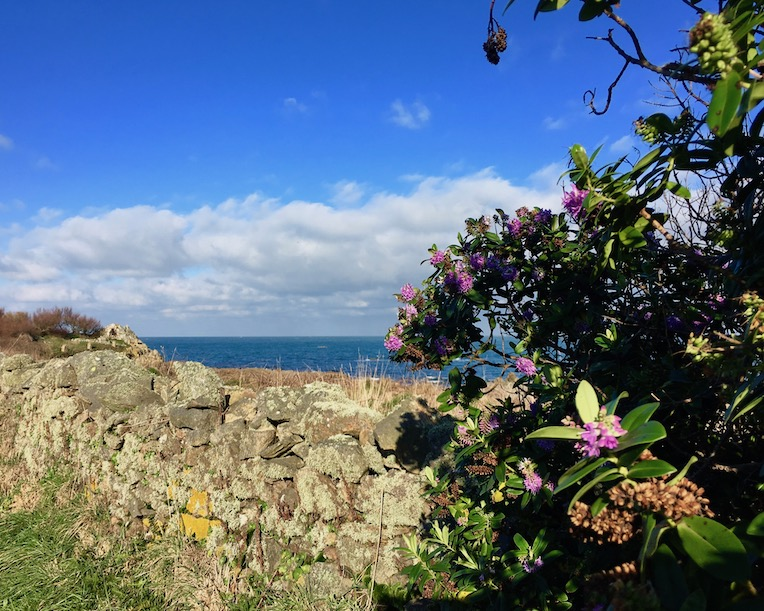 Ausblicke vom Wanderweg Cap La Hague Cap-La-Hague Cotentin Normandie Frankreich