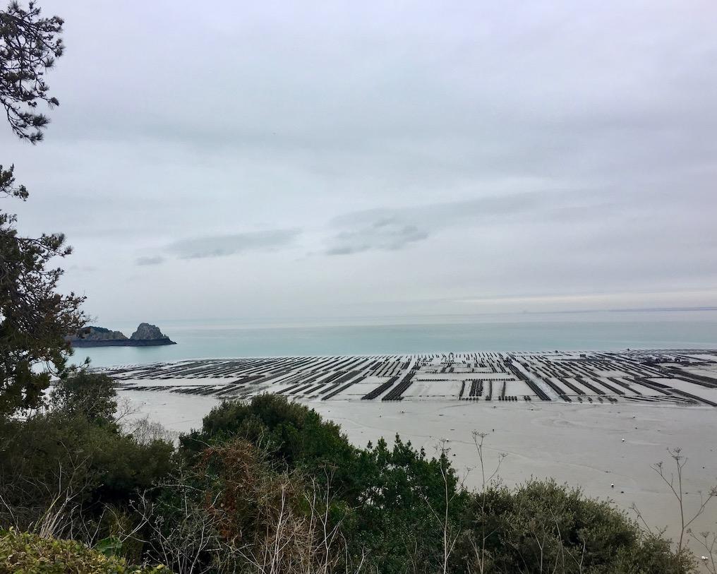 Austernbänke Cancale Bretagne Frankreich