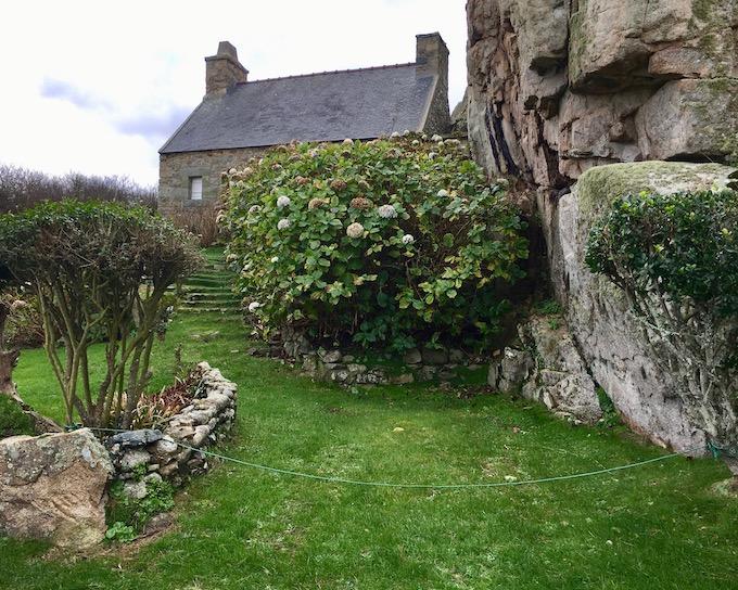 Bretonisches Haus mit Hortensienbaum  Plougrescant Côte-de Granit-Rose Bretagne