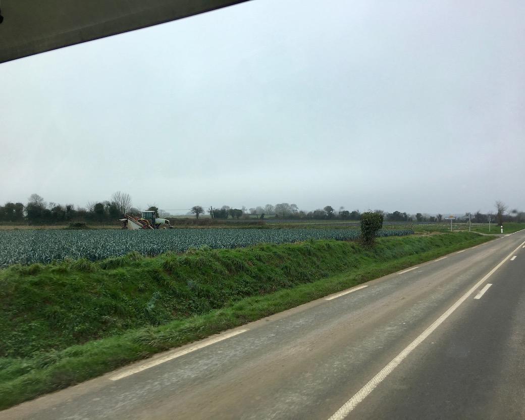 Lauchfelder im Cotentin
