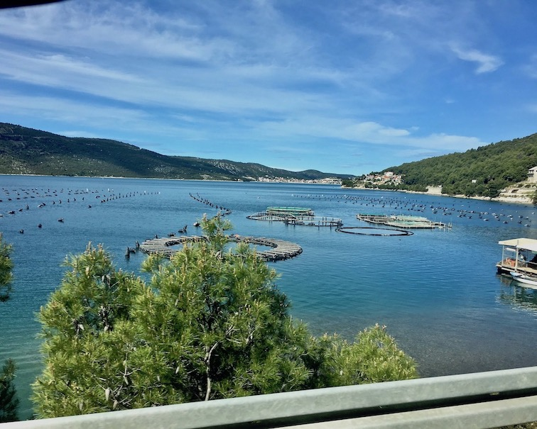 Muschelbänke vor Mali Ston Kroatien