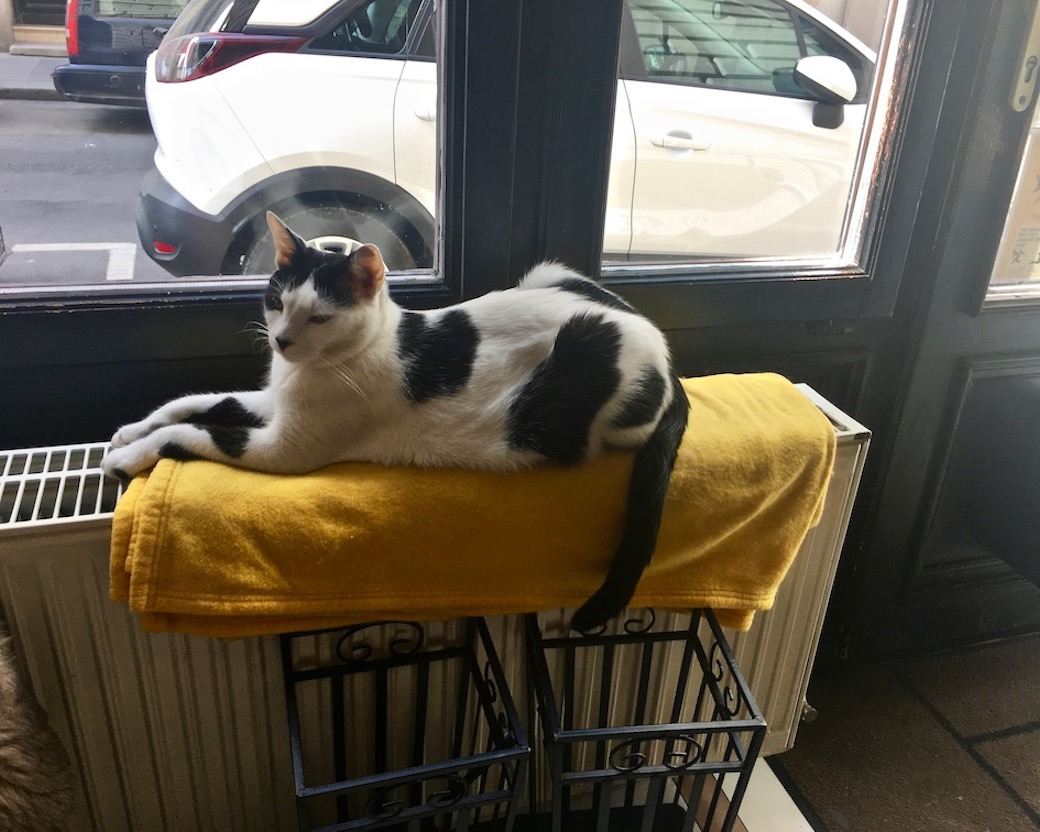 Bewachungskatze vom Eingangs des Cat-Cafe Budapest Ungarn