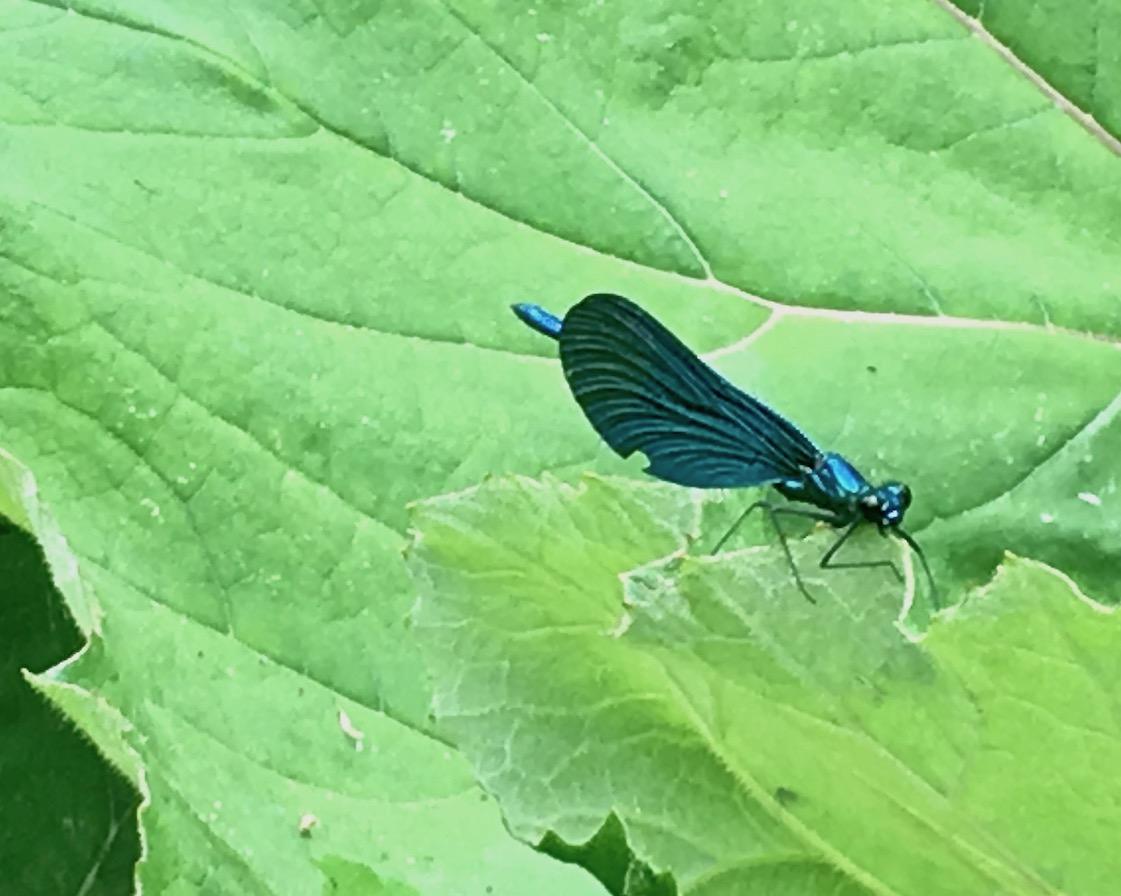 Syri I Kalter Das blaue Auge eine Karstquelle in Albanien Blaue Libellen am Blauen Auge Albanien