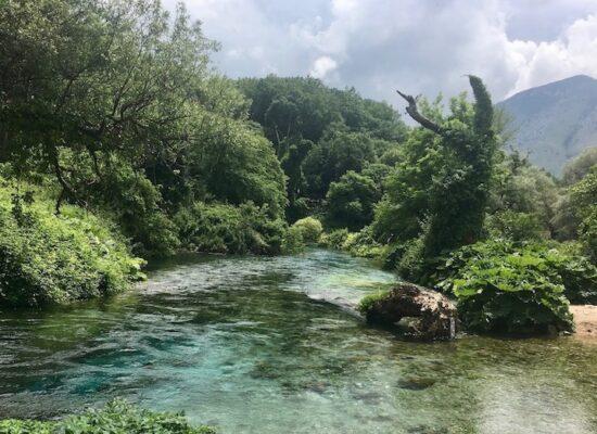 Blaues Auge Syri i Kalter mit Urwald in Albanien