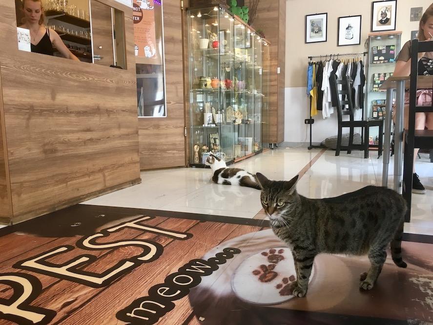 Budapest Donau Ungarn Stadt der Sehenswürdigkeiten Brücken Das Cat-Cafe Budapest Ungarn