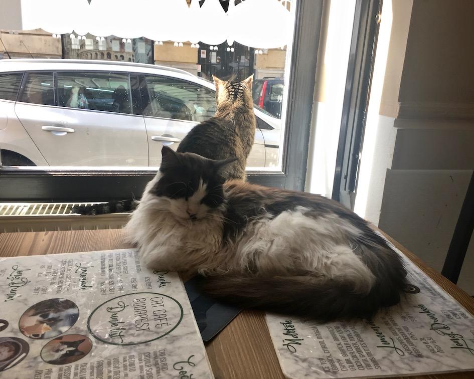 Die Chefs im Cat-Cafe Budapest