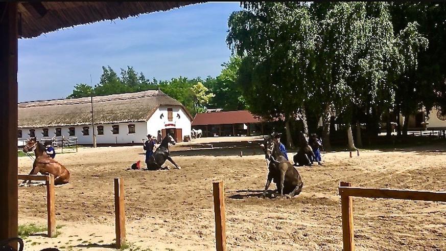 Puszta Steppe Csikós im Nationalpark Ungarische Post in Tanyacsárda Gehorsamsübung durch Csikós Pferdedressur Ungarn