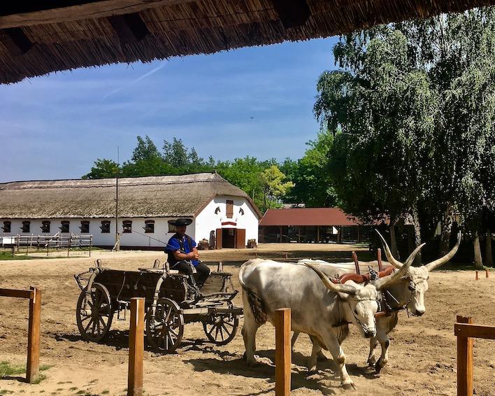 Puszta Steppe Csikós im Nationalpark Ungarische Post in Tanyacsárda Gespann Ungarisches-Graurind in Üj Tanyacsarda Felsölajos Ungarn
