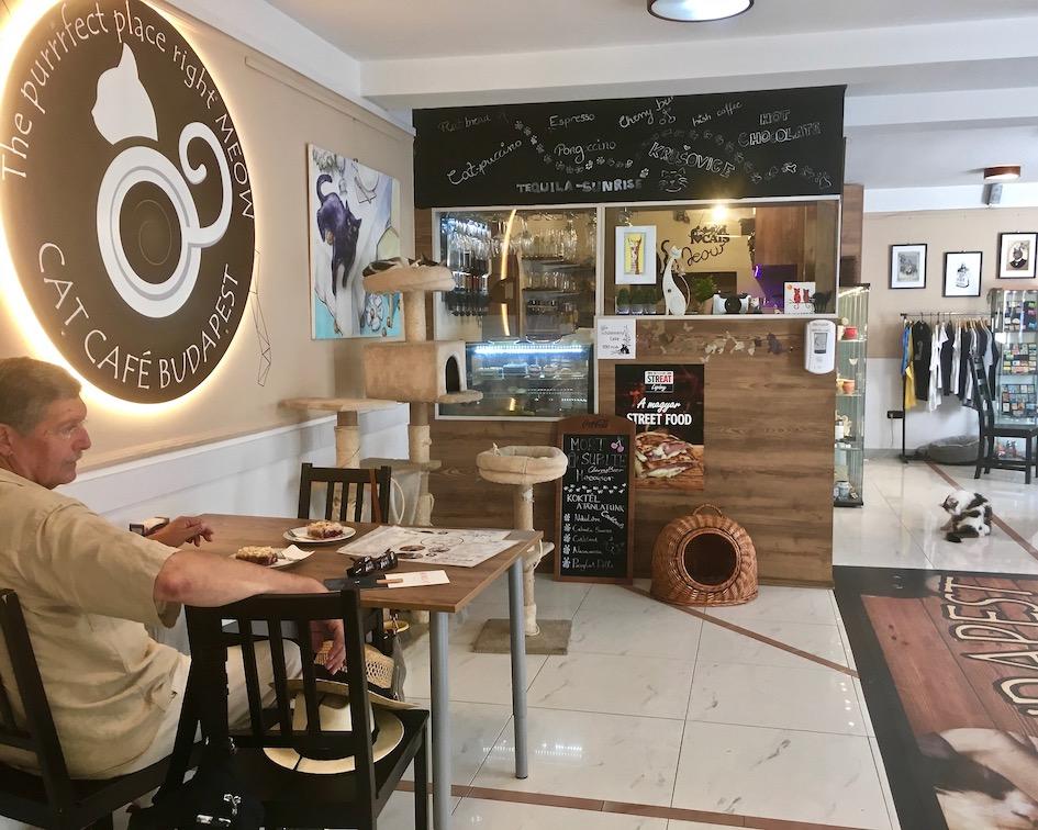 Im Cat-Cafe Budapest Ungarn