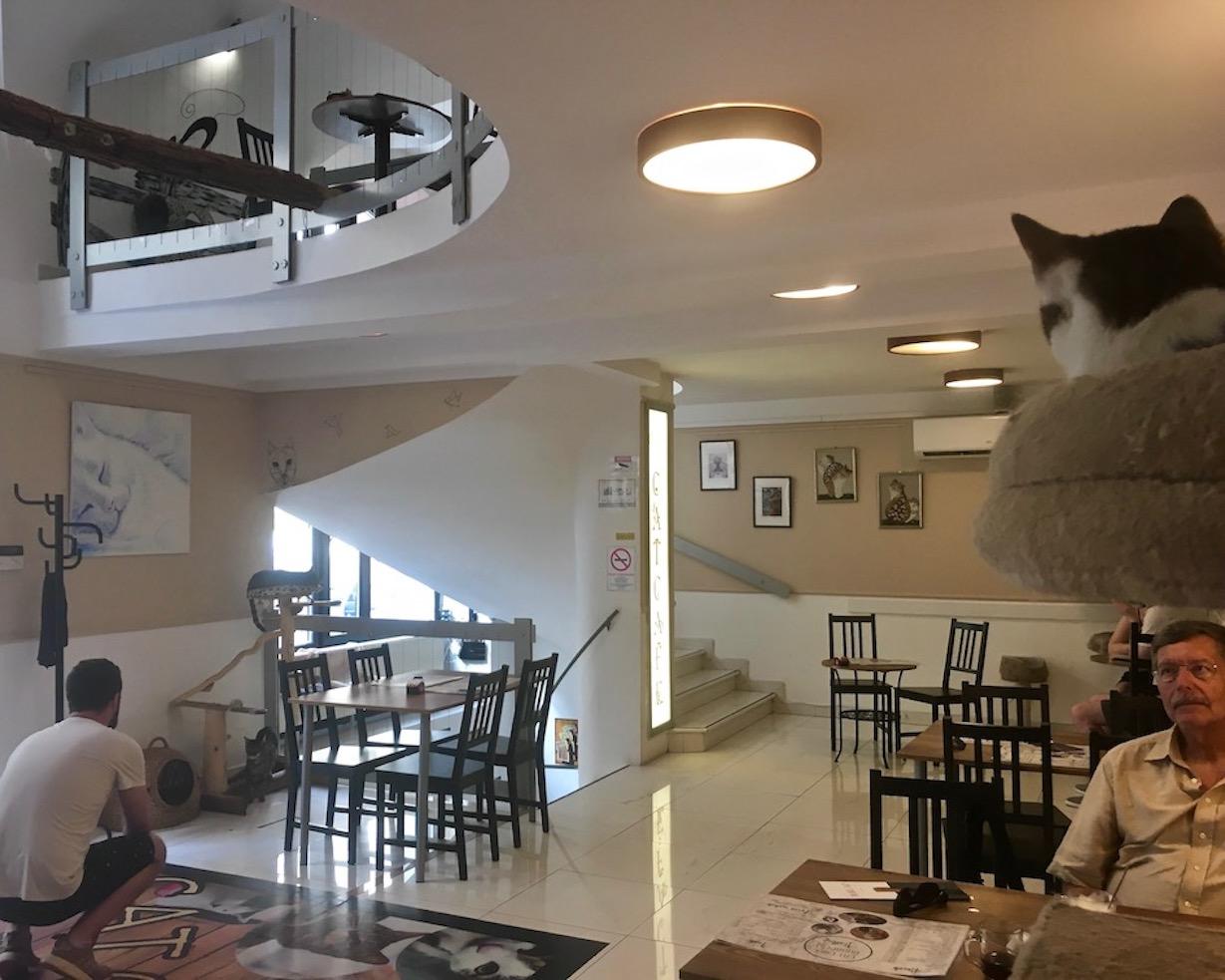 Innenraum Cat-Cafe Budapest Ungarn
