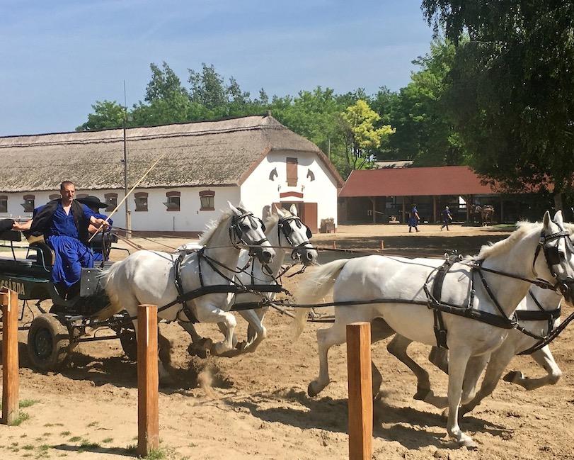 Puszta Steppe Csikós im Nationalpark Ungarische Post in Tanyacsárda Lipizzaner-Vier-Gespannkutsche in Üj Tanyacsarda in Felsölajos Ungarn