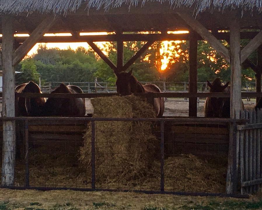 Pferdestallungnen in Üj Tanyacsarda Ungarn