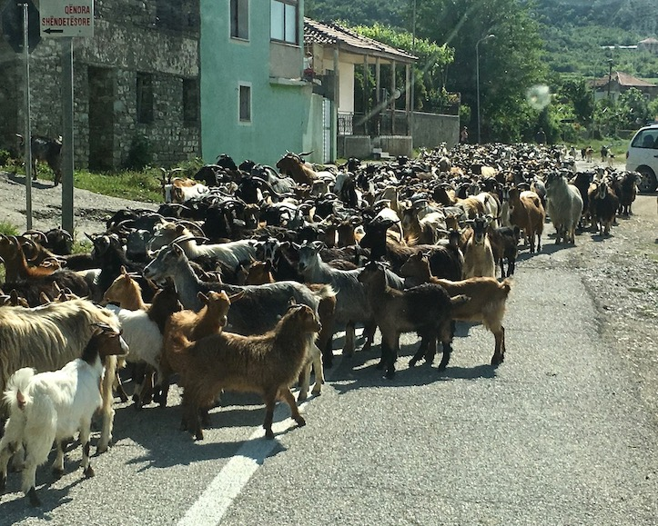 SH75 Albanien 2