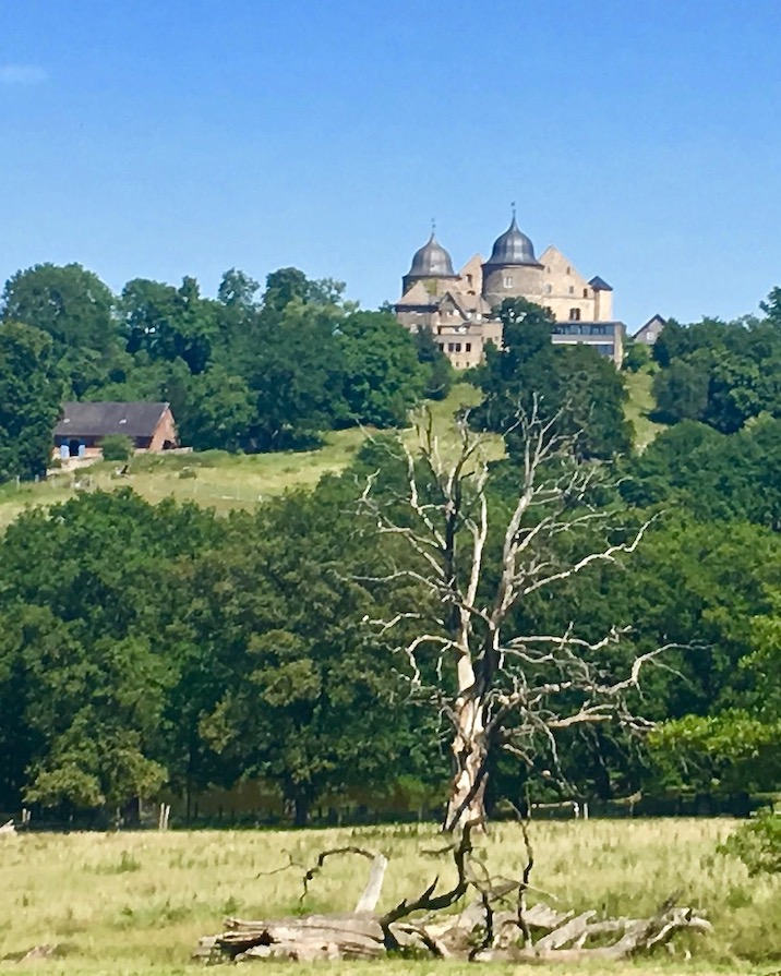 Sababurg im Reinhardswald Deutschland