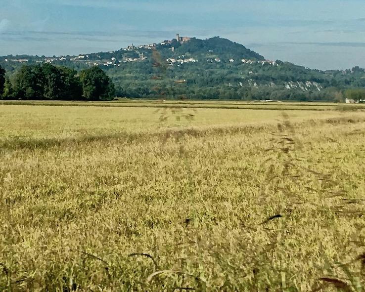 Reisfelder um Arborio in der Poebene Italien