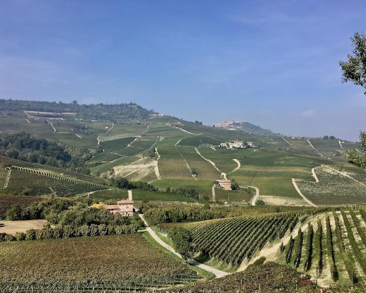 Weinberge in der Langhe Piemont Italien