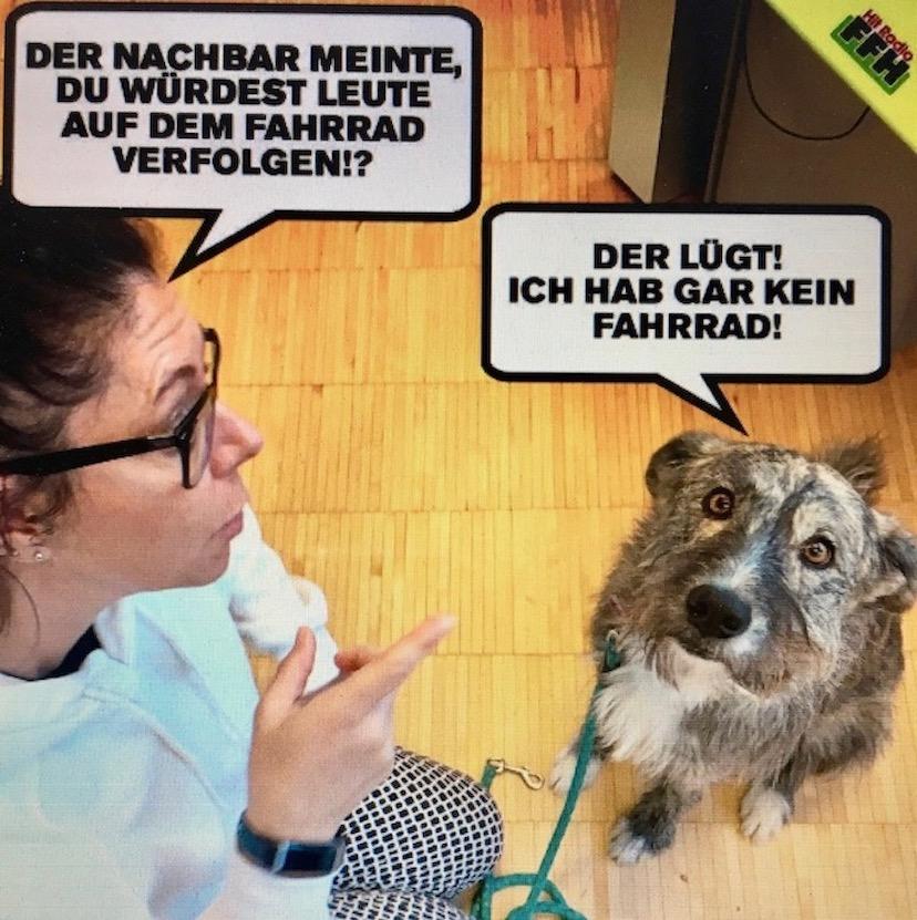 Hund unter Verdacht in Amsterdam