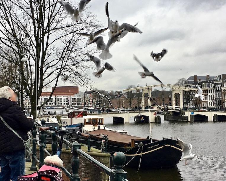 Mövenfütterung an der Mageren-Brug Amsterdam Niederlande