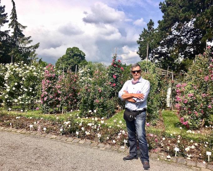 Bei den Kletterosen im Europa-Rosarium Sangerhausen