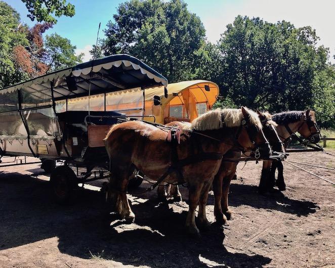 Prerow Pferdekutschen am Darßer-Ort Natureum