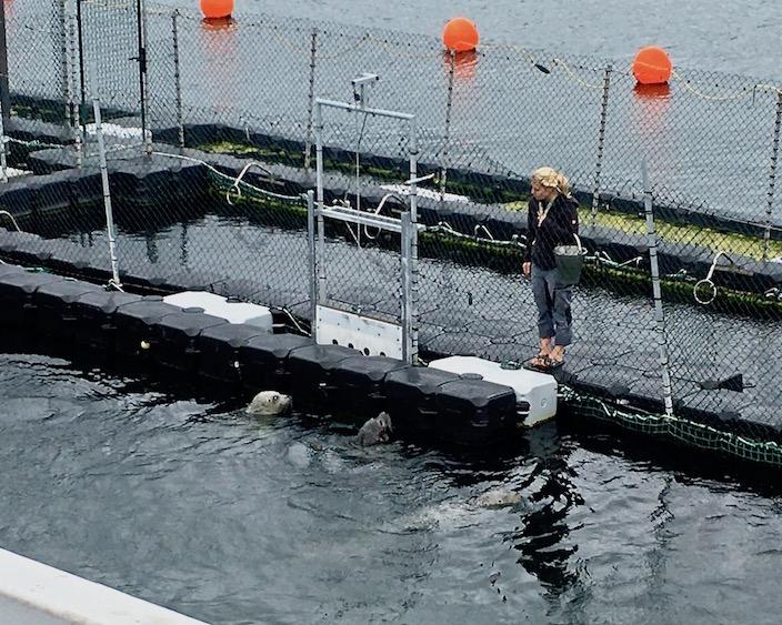 Robbenforschungszentrum Warnemünd Start der Vorführung