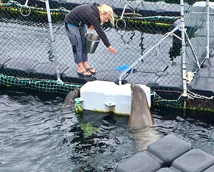 Robbenforschungszentrum Warnemünde Begrüßungsritual