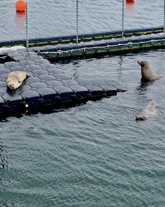 Robbenforschungszentrum Warnemünde Seehunde
