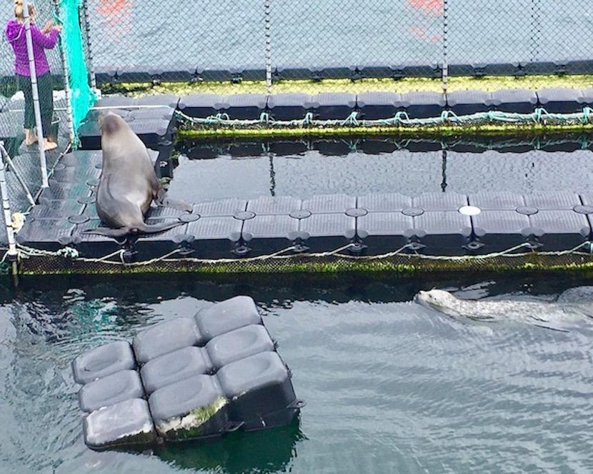 Robbenforschungszentrum Warnemünde Seelöwe und Seehund