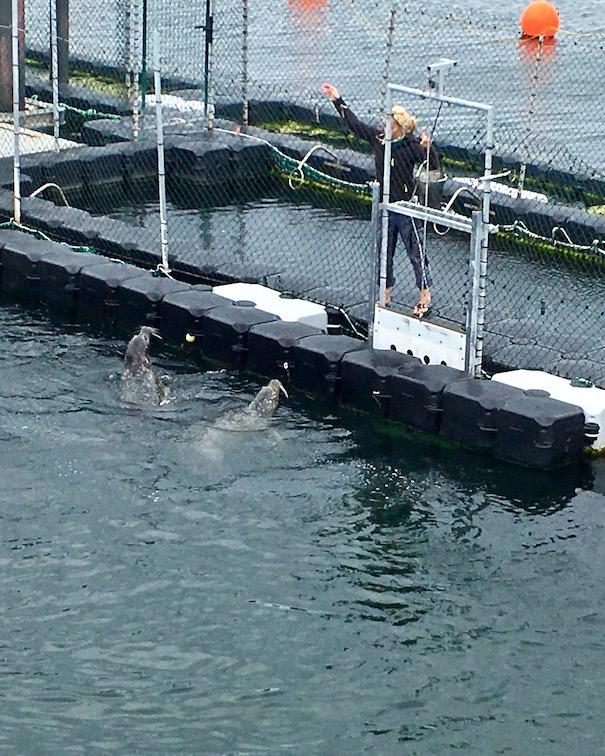Robbenforschungszentrum Warnemünde Trainingsanweisung zum Salto