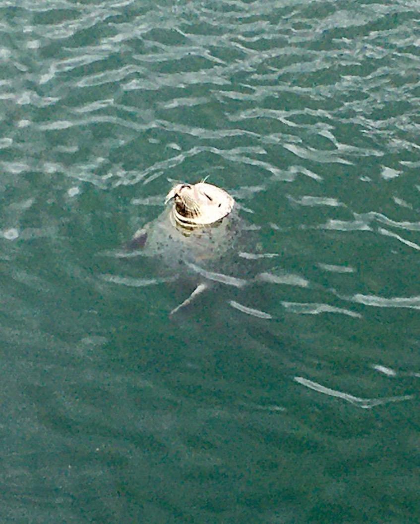 Robbenforschungszentrum Warnemünde schlafende Robbe