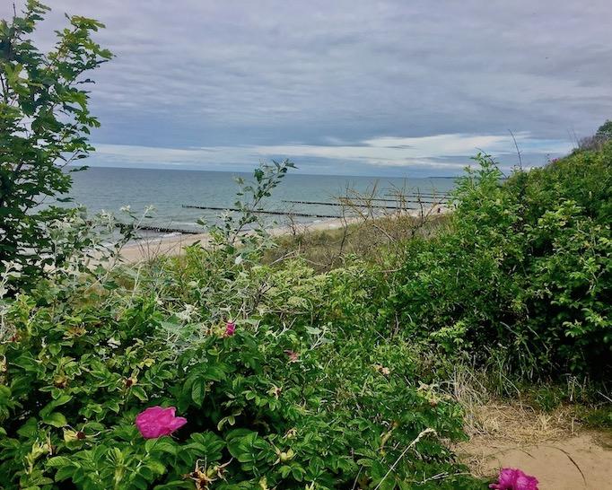 Steilküste Fischland Ahrenshoop und Wustrow Deutschland