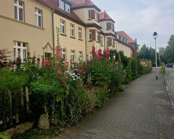 Stockrosen in der Franz-Wessel-Straße Stralsund