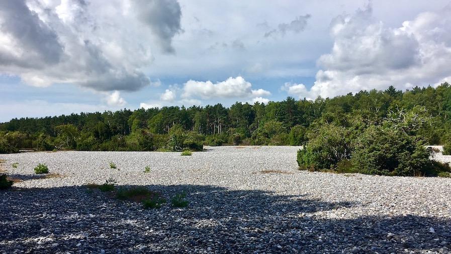 Insel Rügen Die Feuersteinfelder zwischen Prora und Neu Mukran