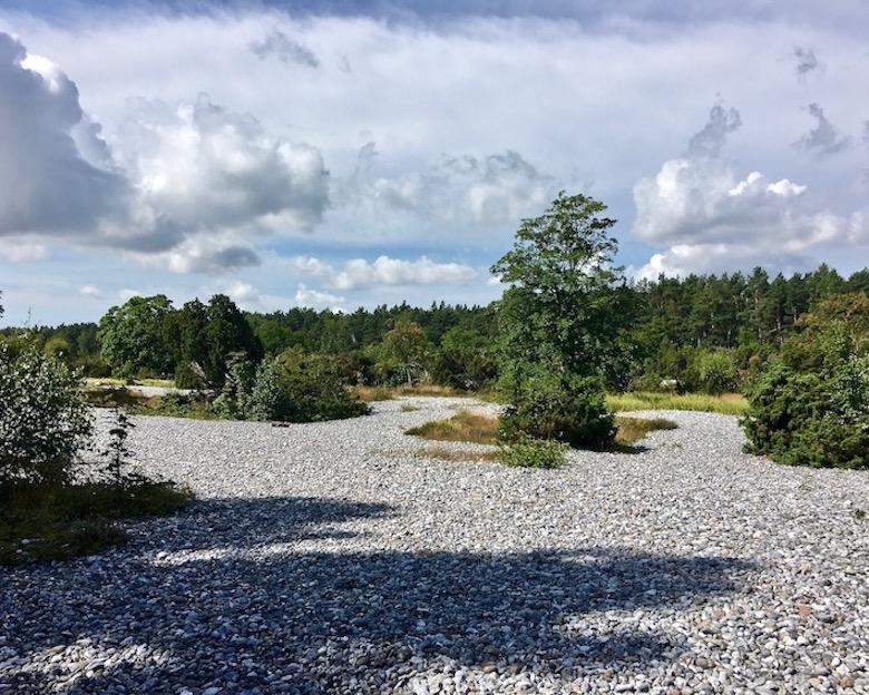 Insel Rügen Feuersteinfelder zwischen Neu Mukran und Prora