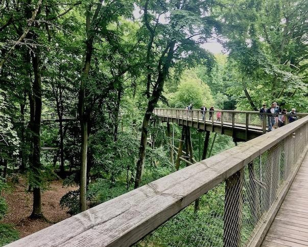 Rügen Prora Adlerhorst Rügen Naturerbe-Zentrum-Rügen Beginn des Baumwipfelpfad