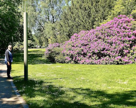 Bad Oeynhausen Kurpark in Bad Oeynhausen Rhododendren-Pracht