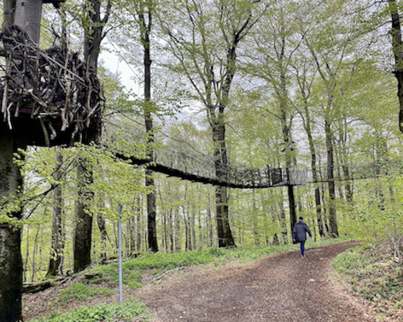 Hoherodskopf Erlebnisberg Vogelsberg Baumkronenpfad