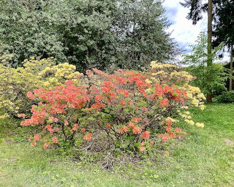Schloss Wilhelmshöhe Blumenbeete Rhododendron Bergpark Wilhelmshöhe Kassel Hessen Deutschland
