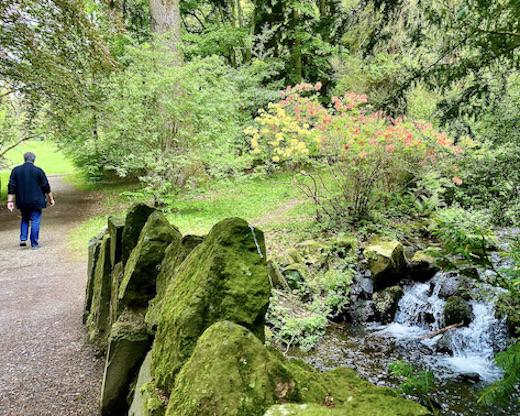 Schloss Wilhelmshöhe blühener Rhododendron Bergpark Wilhelmshöhe Kassel Hessen Deutschland