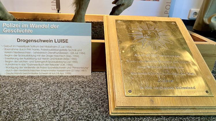 Nienburg Spargelstadt an der Weser Sehenswürdigkeiten Historische Altstadt Drogenschwein Luise
