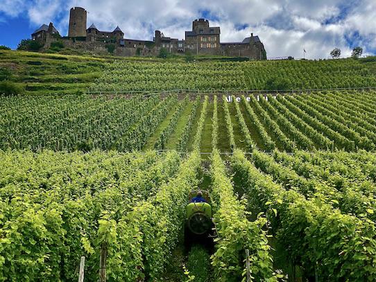 Burg Thurant bei Alken an der Mosel Burg Thurant Weinberg Stadt Alken Rheinland-Pfalz Deutschland