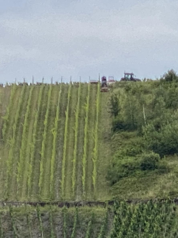 Winzerarbeiten im Weinberg Piesport fast oben