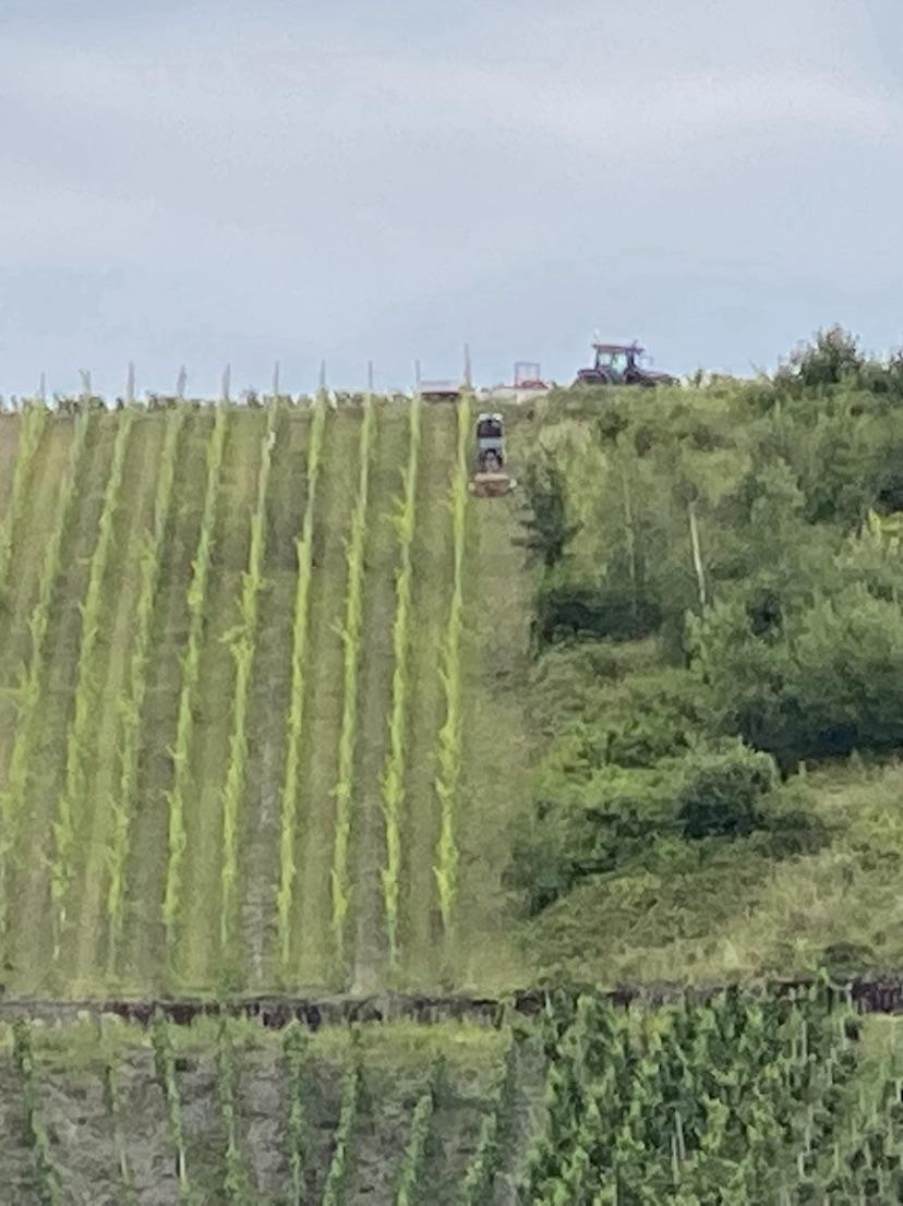 Winzerarbeiten im Weinberg Piesport mit dem Traktor