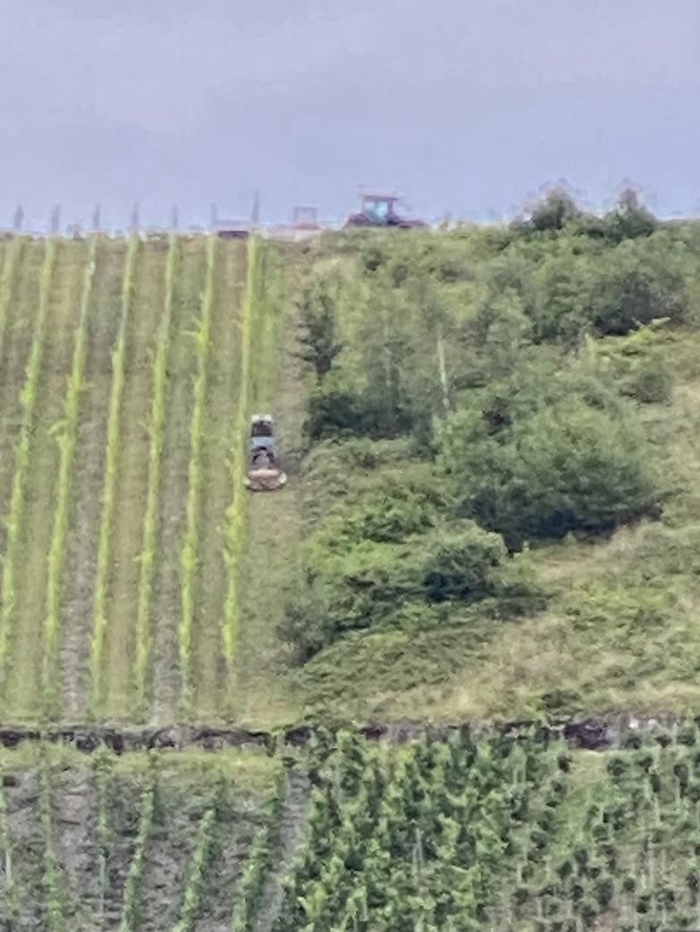 Winzerarbeiten im Weinberg Piesport